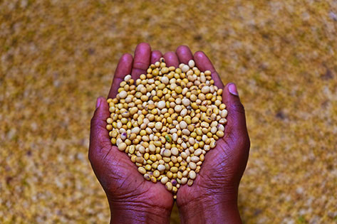 Soy Afric Dry Cereals